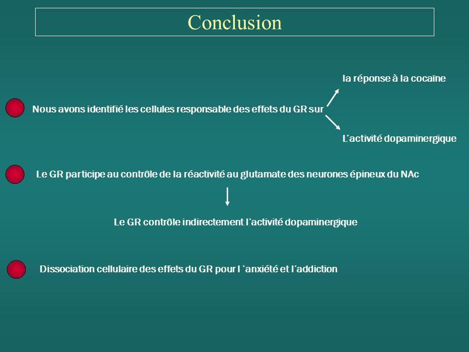 Conclusion Nous avons identifié les cellules responsable des effets du GR sur Le GR participe au contrôle de la réactivité au glutamate des neurones épineux du NAc la réponse à la cocaïne Lactivité dopaminergique Le GR contrôle indirectement lactivité dopaminergique Dissociation cellulaire des effets du GR pour l anxiété et laddiction