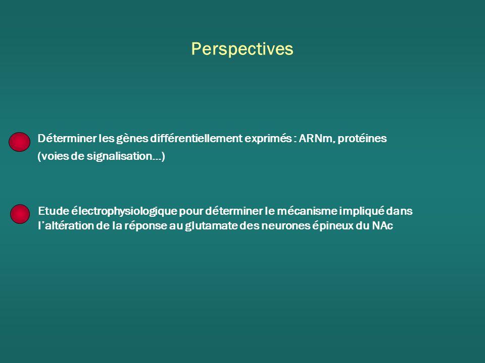 Perspectives Déterminer les gènes différentiellement exprimés : ARNm, protéines (voies de signalisation…) Etude électrophysiologique pour déterminer le mécanisme impliqué dans laltération de la réponse au glutamate des neurones épineux du NAc