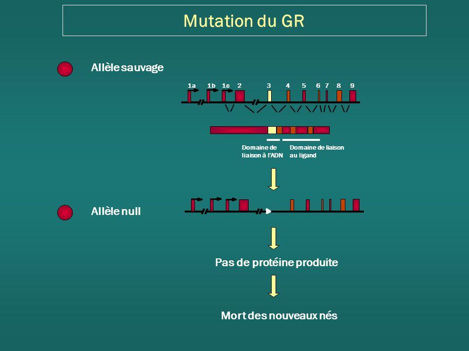 Mutagénèse conditionnelle du GR hGH polyA Nestine-Cre Cre Région Nestine 5 Nestine enh II Cre Inactivation de GR dans le système nerveux : souris GR NesCre GR loxP loxP Tronche et al, Nature Genetics, 1999 Comportement Collaboration