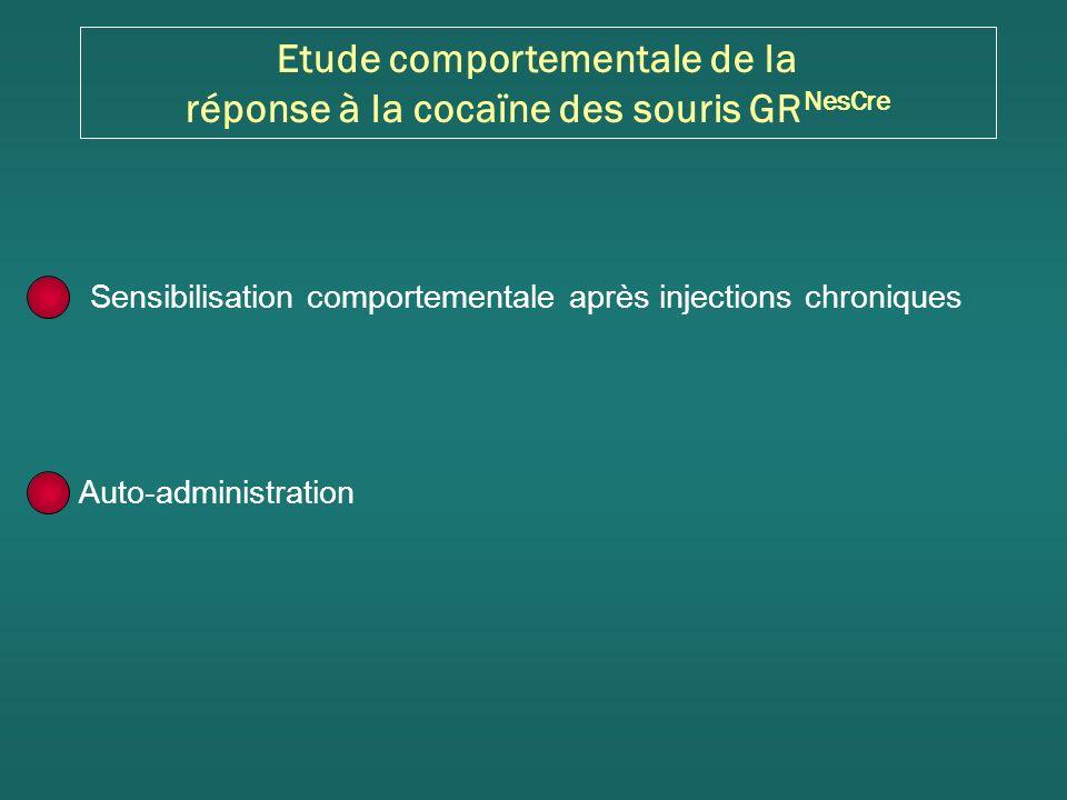 Sensibilisation comportementale après injections chroniques Auto-administration Etude comportementale de la réponse à la cocaïne des souris GR NesCre