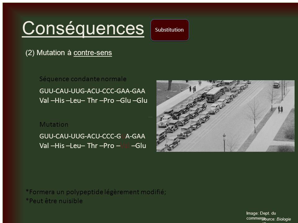 _ _ Conséquences (2) Mutation à contre-sens Substitution Image: Dept. du commerce Source: Biologie 12 GUU-CAU-UUG-ACU-CCC-GAA-GAA Val –His –Leu– Thr –