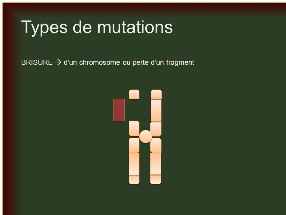 _ _ Types de mutations PERTE dun ou plusieurs chromosomes