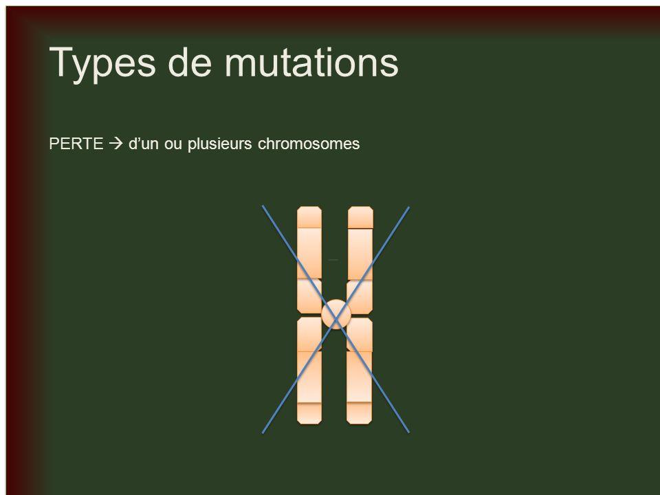 _ _ Types de mutations COPIES SUPPLÉMENTAIRE dun ou plusieurs chromosomes X 2