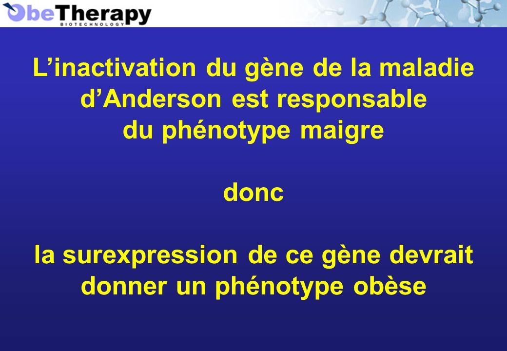 Linactivation du gène de la maladie dAnderson est responsable du phénotype maigre donc la surexpression de ce gène devrait donner un phénotype obèse