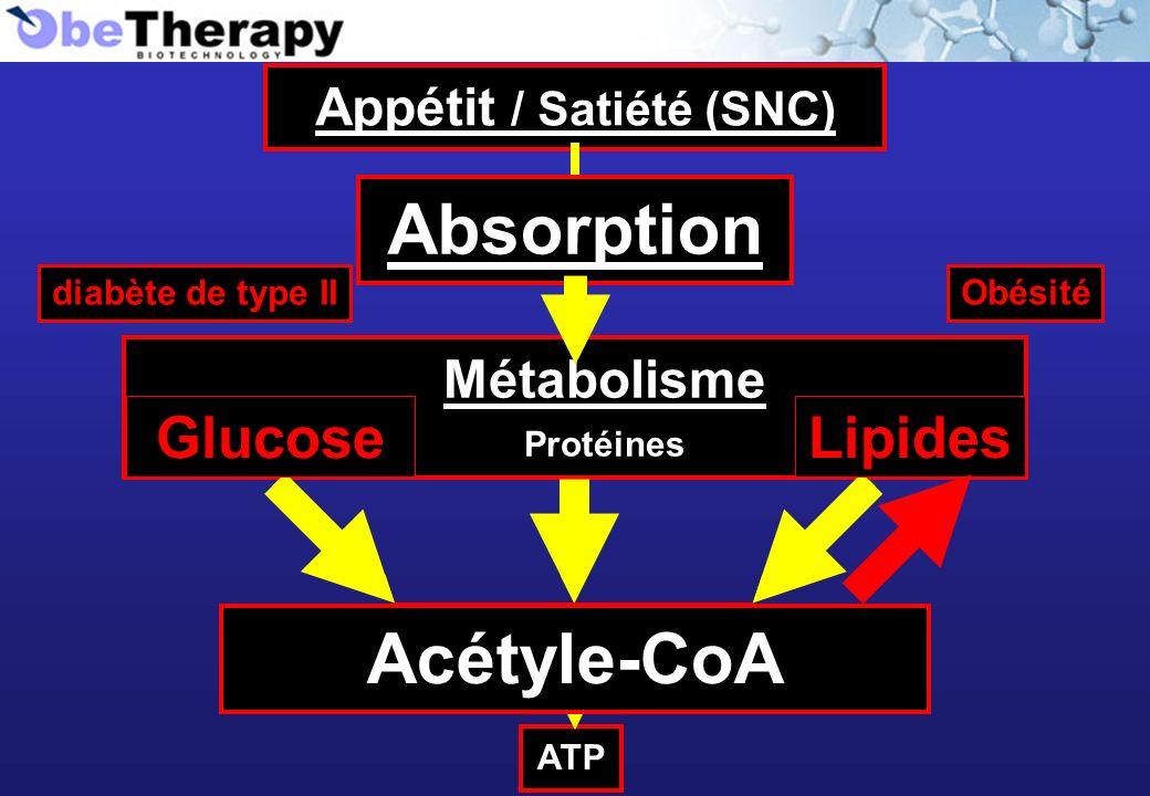 Acétyle-CoA Appétit / Satiété (SNC) Absorption Métabolisme GlucoseProtéines Lipides ATP Acétyle-CoA Absorption Lipides Obésité Glucose diabète de type