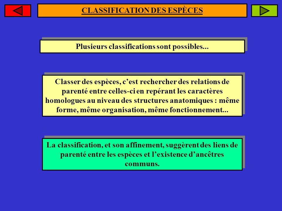 Plusieurs classifications sont possibles... Plusieurs classifications sont possibles... Classer des espèces, cest rechercher des relations de parenté