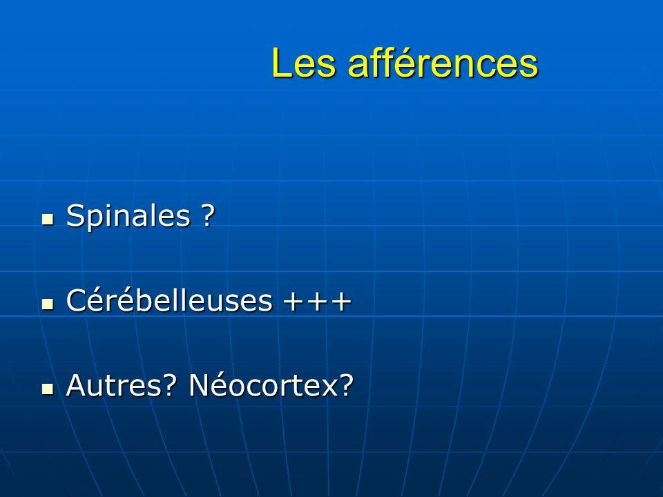 Les afférences Les afférences Spinales ? Spinales ? Cérébelleuses +++ Cérébelleuses +++ Autres? Néocortex? Autres? Néocortex?