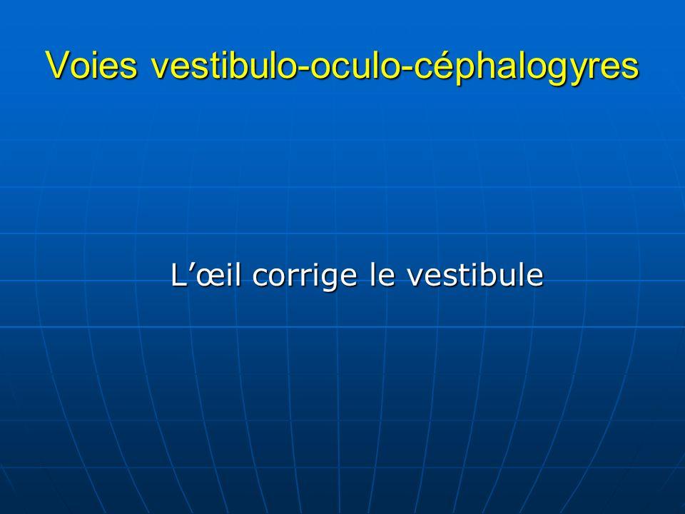 Voies vestibulo-oculo-céphalogyres Lœil corrige le vestibule Lœil corrige le vestibule
