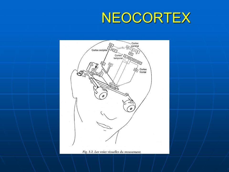 NEOCORTEX NEOCORTEX