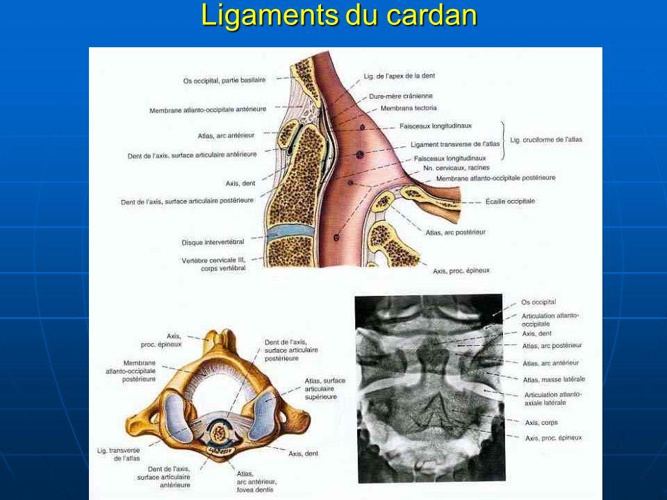 Ligaments du cardan