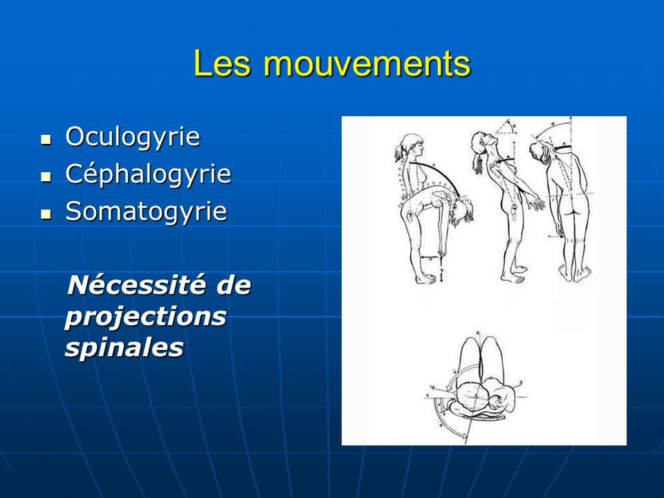 Les mouvements Oculogyrie Oculogyrie Céphalogyrie Céphalogyrie Somatogyrie Somatogyrie Nécessité de projections spinales Nécessité de projections spin