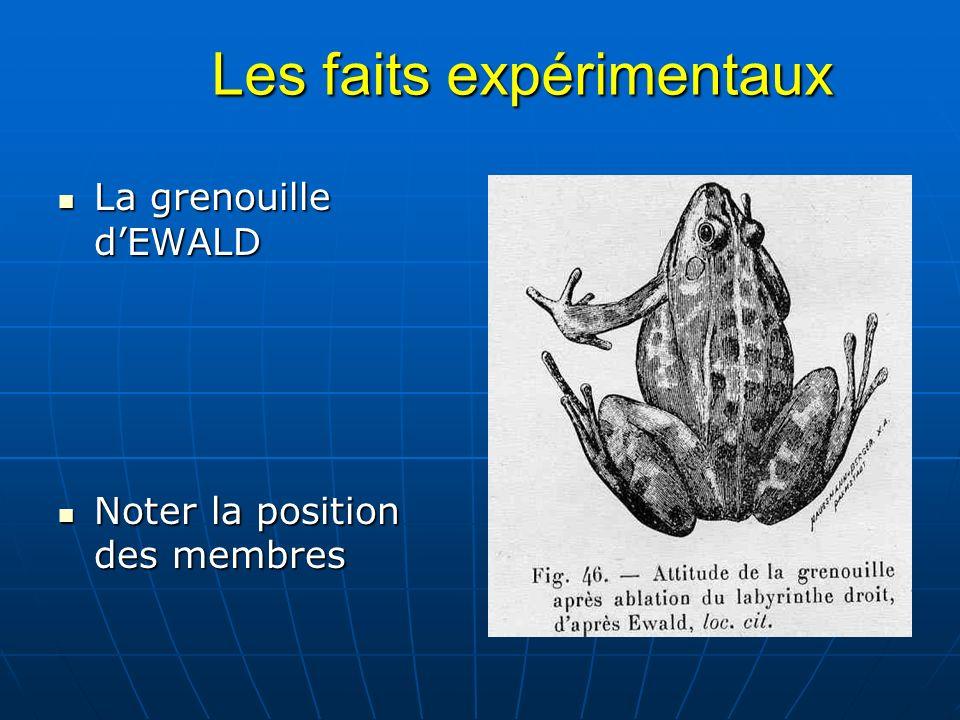 Les faits expérimentaux Les faits expérimentaux La grenouille dEWALD La grenouille dEWALD Noter la position des membres Noter la position des membres