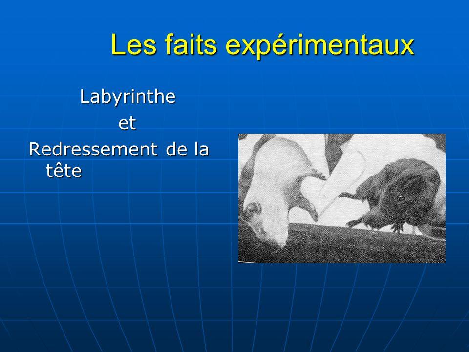 Les faits expérimentaux Les faits expérimentaux Labyrinthe Labyrinthe et et Redressement de la tête
