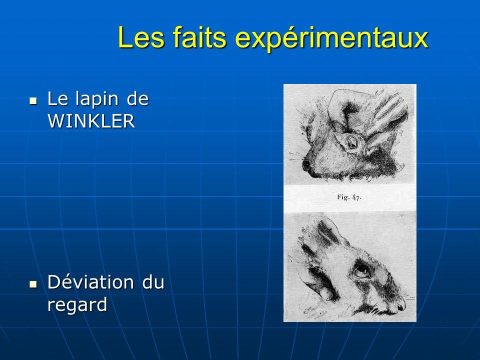Les faits expérimentaux Les faits expérimentaux Le lapin de WINKLER Le lapin de WINKLER Déviation du regard Déviation du regard