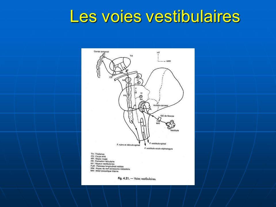 Neuro-Anatomie Neuro-Anatomie Le tractus longitudinal médial Le tractus longitudinal médial
