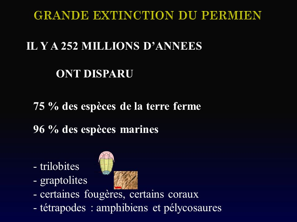 IL Y A 252 MILLIONS DANNEES ONT DISPARU 75 % des espèces de la terre ferme 96 % des espèces marines - trilobites - graptolites - certaines fougères, c