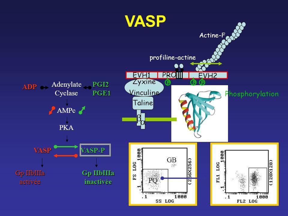 VASP Actine-F EVH1 PRO EVH2 profiline-actine Zyxine Vinculine Taline PPP Phosphorylation VASP VASP-P Gp IIbIIIa activée inactivée Adenylate Cyclase AM