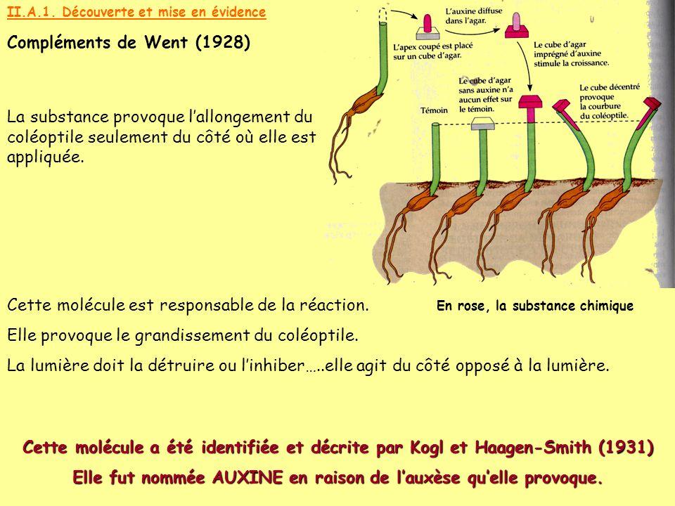 II.A.1. Découverte et mise en évidence Compléments de Went (1928) En rose, la substance chimique La substance provoque lallongement du coléoptile seul