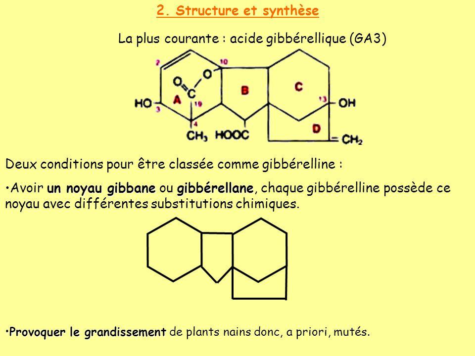 2. Structure et synthèse La plus courante : acide gibbérellique (GA3) Deux conditions pour être classée comme gibbérelline : un noyau gibbanegibbérell