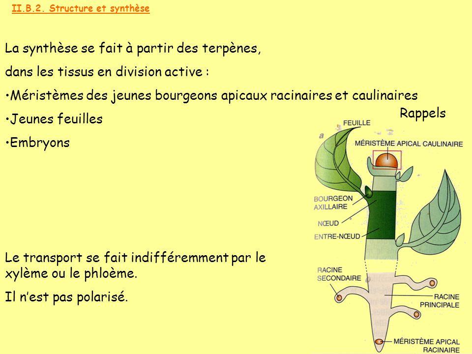 La synthèse se fait à partir des terpènes, dans les tissus en division active : Méristèmes des jeunes bourgeons apicaux racinaires et caulinaires Jeun