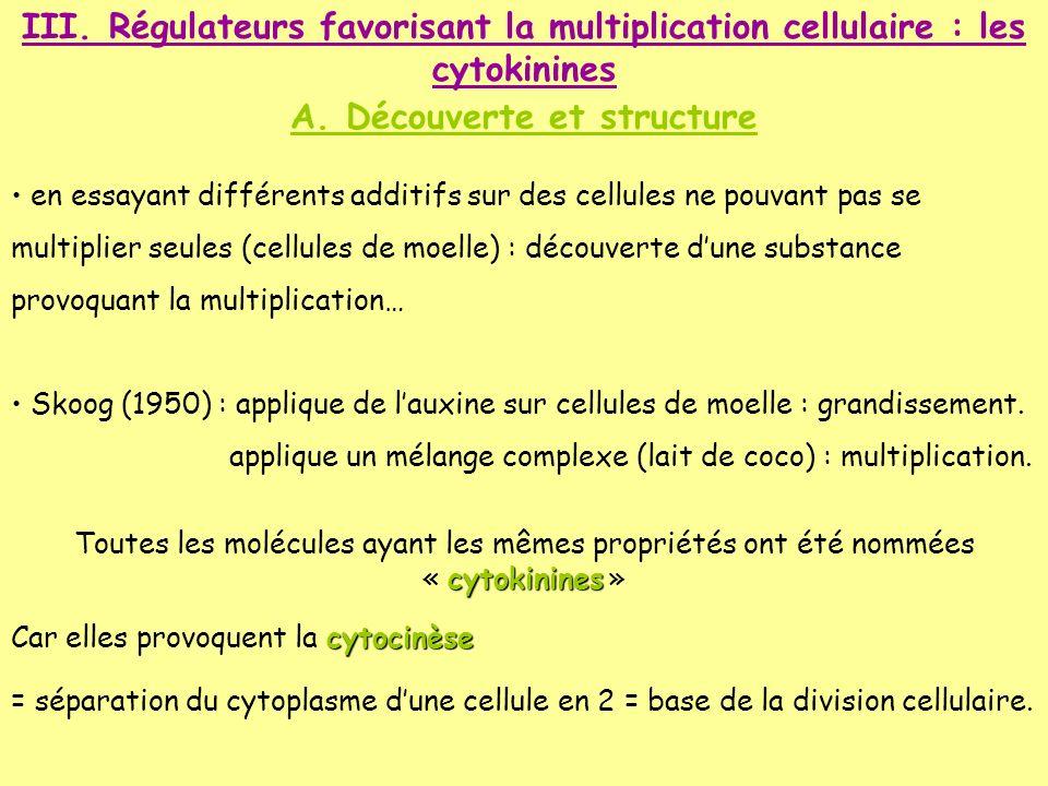 III. Régulateurs favorisant la multiplication cellulaire : les cytokinines A. Découverte et structure en essayant différents additifs sur des cellules