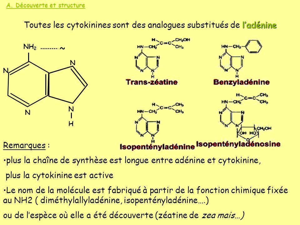 A. Découverte et structure ladénine Toutes les cytokinines sont des analogues substitués de ladénine N N H N NH 2 ~ N Remarques : plus la chaîne de sy