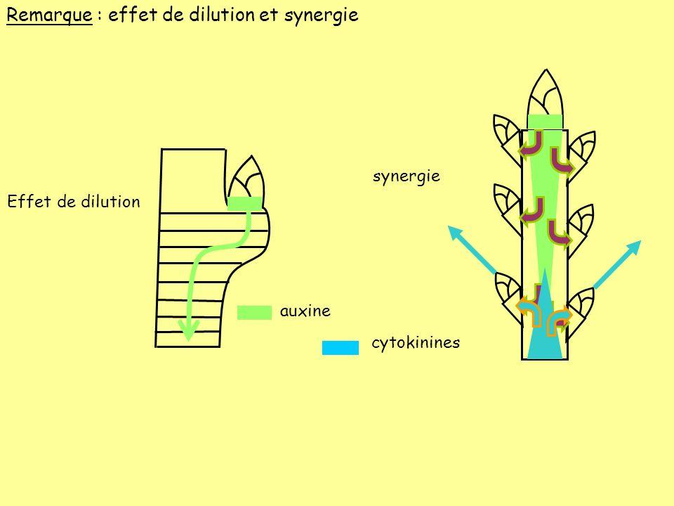 auxine Effet de dilution synergie cytokinines Remarque : effet de dilution et synergie