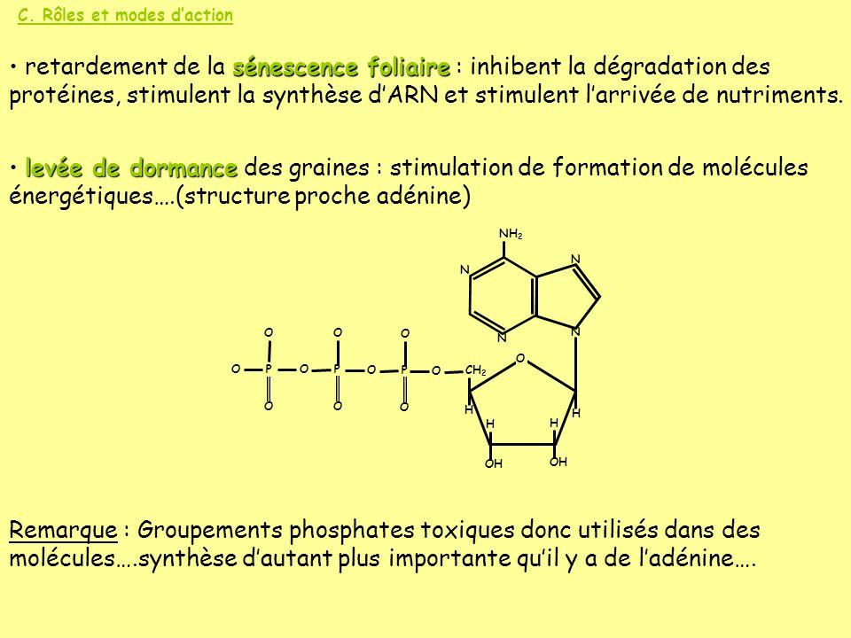 C. Rôles et modes daction sénescence foliaire retardement de la sénescence foliaire : inhibent la dégradation des protéines, stimulent la synthèse dAR