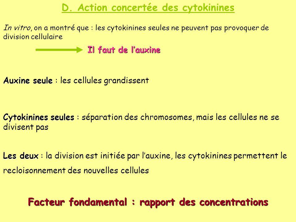 D. Action concertée des cytokinines In vitro, on a montré que : les cytokinines seules ne peuvent pas provoquer de division cellulaire Il faut de laux