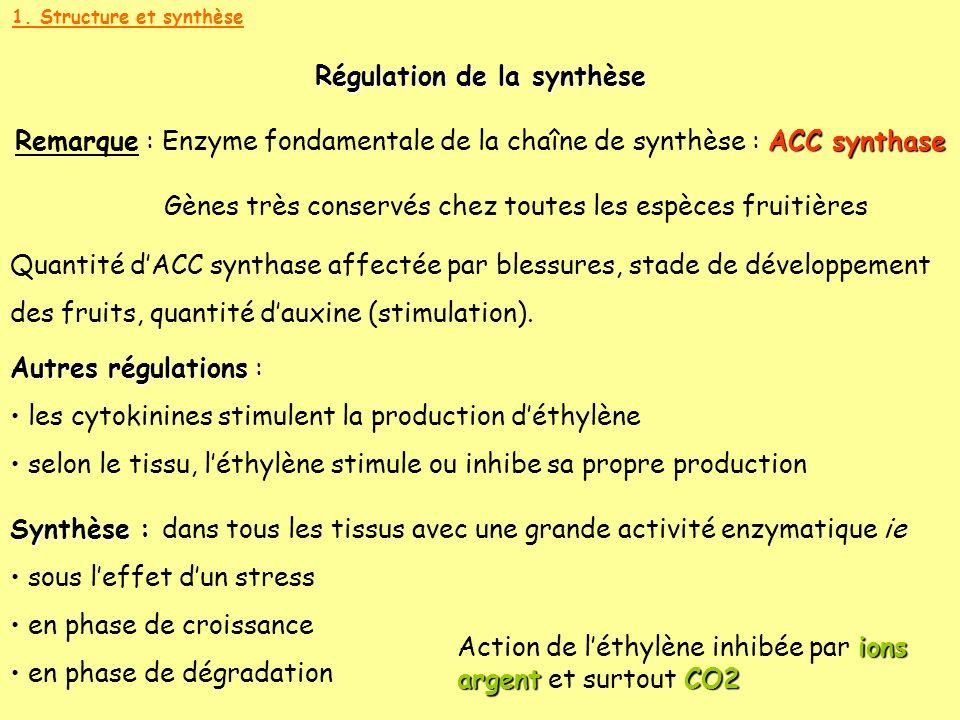 1. Structure et synthèse Régulation de la synthèse ACC synthase Remarque : Enzyme fondamentale de la chaîne de synthèse : ACC synthase Gènes très cons