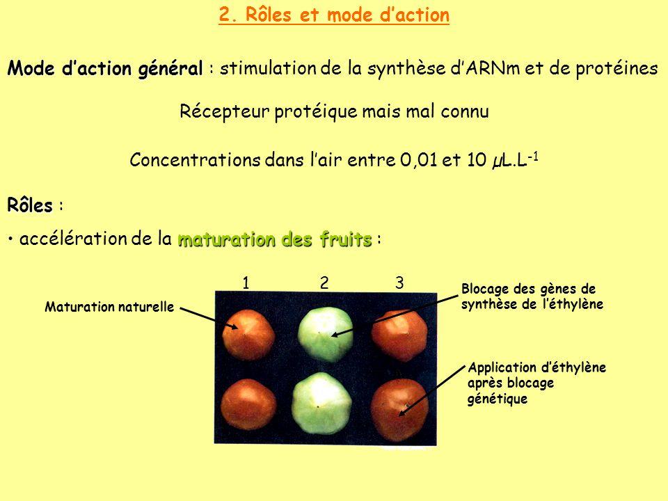 2. Rôles et mode daction Mode daction général Mode daction général : stimulation de la synthèse dARNm et de protéines Récepteur protéique mais mal con