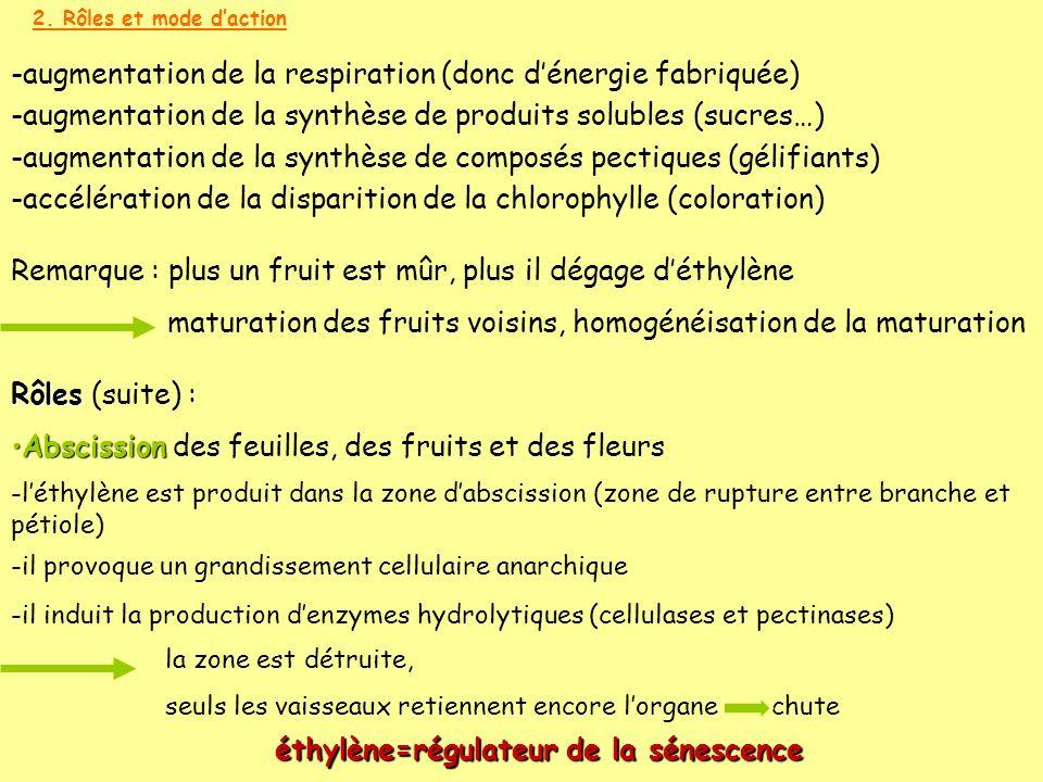 2. Rôles et mode daction Rôles Rôles (suite) : AbscissionAbscission des feuilles, des fruits et des fleurs Remarque : plus un fruit est mûr, plus il d
