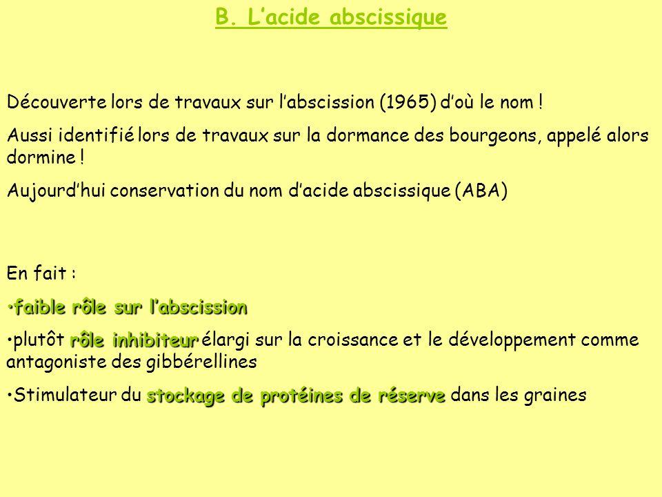 B. Lacide abscissique Découverte lors de travaux sur labscission (1965) doù le nom ! Aussi identifié lors de travaux sur la dormance des bourgeons, ap