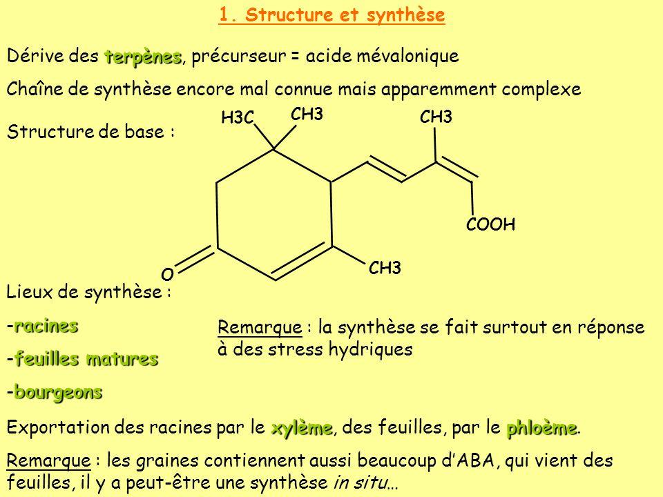 1. Structure et synthèse terpènes Dérive des terpènes, précurseur = acide mévalonique Chaîne de synthèse encore mal connue mais apparemment complexe S