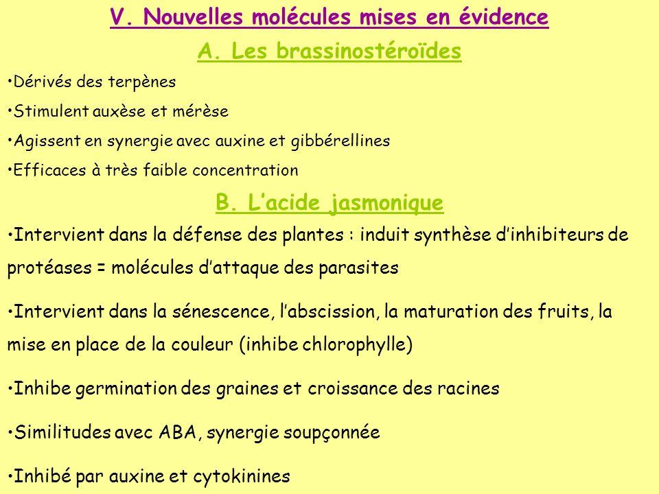 V. Nouvelles molécules mises en évidence A. Les brassinostéroïdes Dérivés des terpènes Stimulent auxèse et mérèse Agissent en synergie avec auxine et