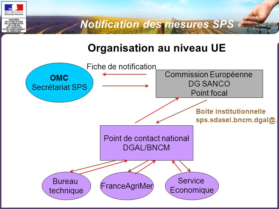 Organisation au niveau UE OMC Secrétariat SPS Commission Européenne DG SANCO Point focal Point de contact national DGAL/BNCM Bureau technique FranceAgriMer Service Economique Boite institutionnelle sps.sdasei.bncm.dgal@… Fiche de notification Notification des mesures SPS