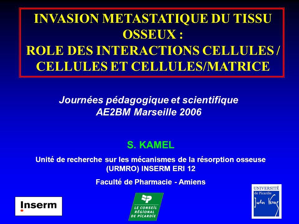 DÉRÉGULATIONS PATHOLOGIQUES DU REMODELAGE OSSEUX AU COURS DE LINVASION MÉTASTATIQUE Résorption (Ostéoclastes) Formation (Ostéoblastes) Maintien de la masse osseuse Résorption Formation Perte de masse osseuse Tumeur ostéolytique (sein, myélome) Formation Résorption Gain de masse osseuse Tumeur ostéocondensante (sein,prostate) Cellules tumorales