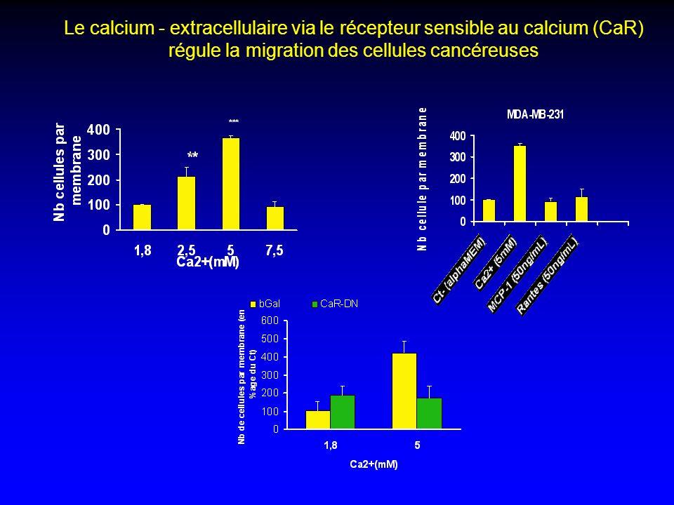 Le calcium - extracellulaire via le récepteur sensible au calcium (CaR) régule la migration des cellules cancéreuses