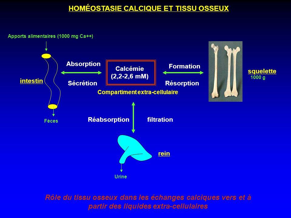 intestin squelette rein Compartiment extra-cellulaire Rôle du tissu osseux dans les échanges calciques vers et à partir des liquides extra-cellulaires