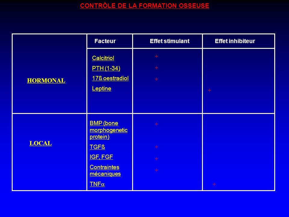 CONTRÔLE DE LA FORMATION OSSEUSE HORMONAL LOCAL FacteurEffet stimulantEffet inhibiteur Calcitriol PTH (1-34) 17ß oestradiol Leptine ++++++ + BMP (bone