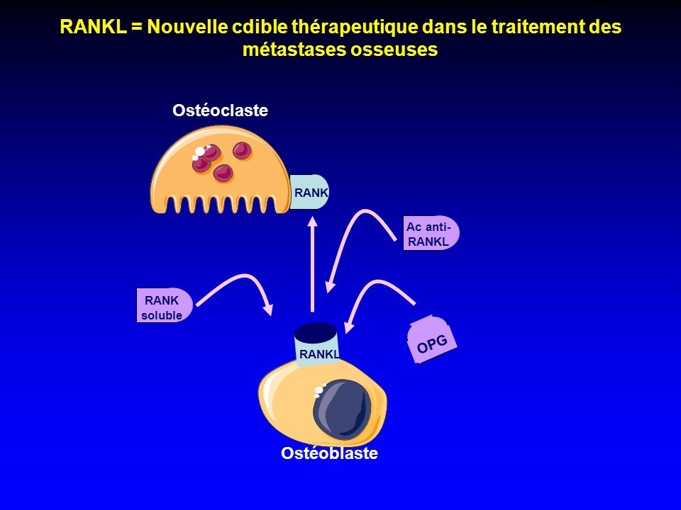 RANKL = Nouvelle cdible thérapeutique dans le traitement des métastases osseuses RANK RANKL Ostéoclaste Ostéoblaste OPG RANK soluble Ac anti- RANKL
