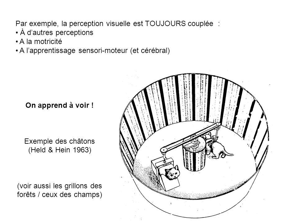 Par exemple, la perception visuelle est TOUJOURS couplée : À dautres perceptions A la motricité A lapprentissage sensori-moteur (et cérébral) On appre