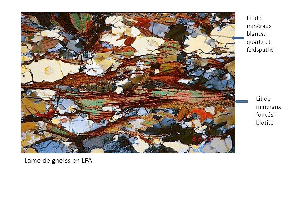 Lame de gneiss en LPA Lit de minéraux blancs: quartz et feldspaths Lit de minéraux foncés : biotite