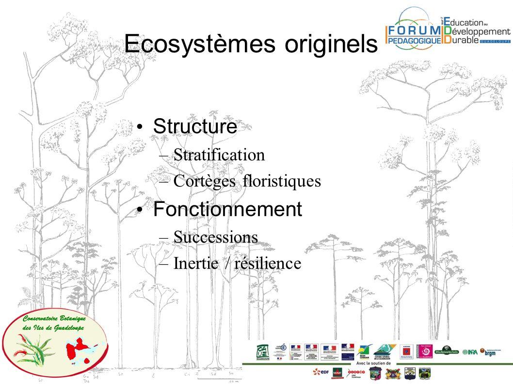 Ecosystèmes originels Structure –Stratification –Cortèges floristiques Fonctionnement –Successions –Inertie / résilience