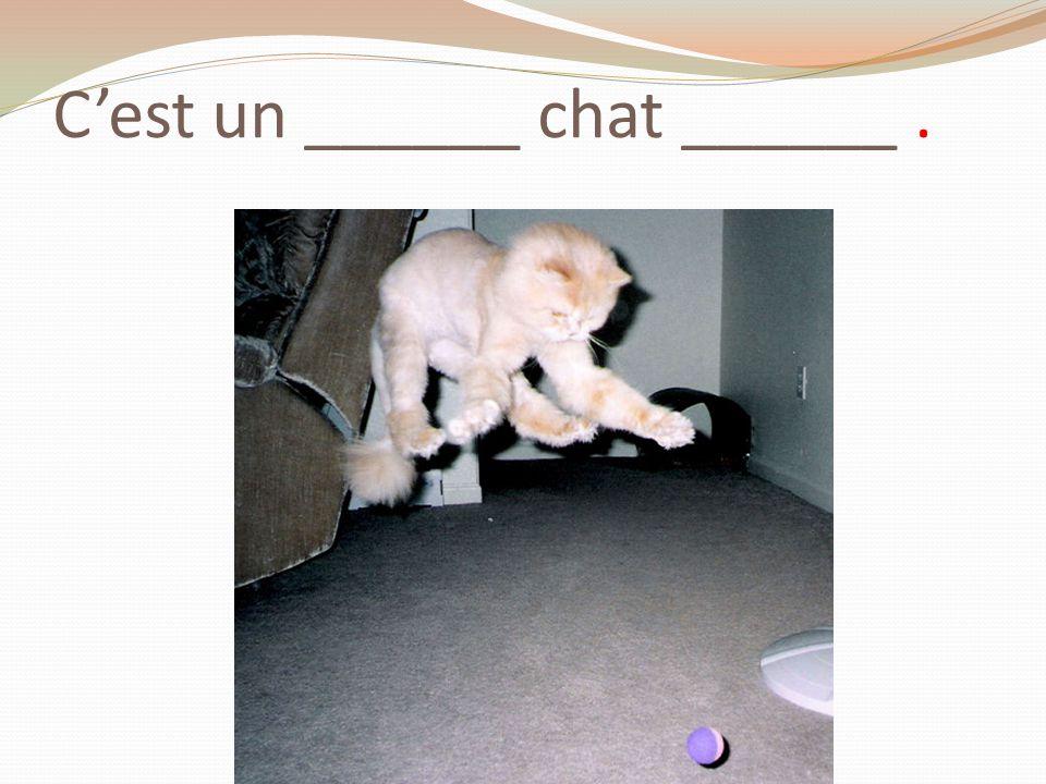 Cest un ______ chat ______.