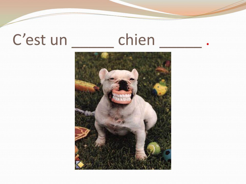 Cest un _____ chien _____.