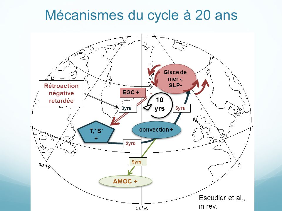 T, S + EGC + 5yrs 3yrs Rétroaction négative retardée AMOC + 9yrs 10 yrs Mécanismes du cycle à 20 ans 2yrs convection + Glace de mer -, SLP- Escudier et al., in rev.