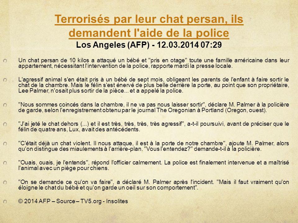 Terrorisés par leur chat persan, ils demandent l'aide de la police Terrorisés par leur chat persan, ils demandent l'aide de la police Los Angeles (AFP