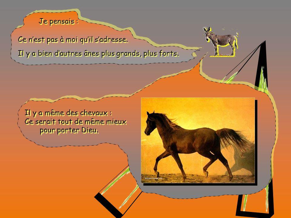 Javais bien entendu dire que Dieu avait besoin des hommes, Javais bien entendu dire que Dieu avait besoin des hommes, mais avait-il vraiment besoin dun âne .
