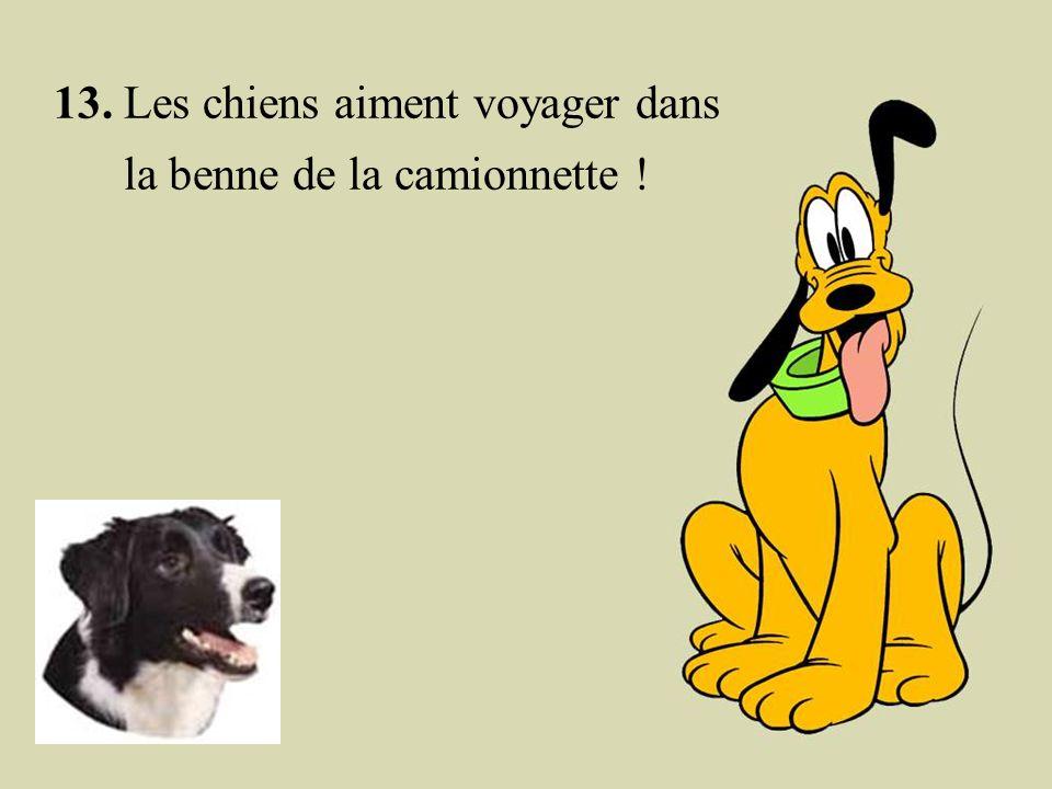 12. Si un chien sent l'odeur d'un autre chien sur vous, il ne se met pas en colère. Il trouve que c'est intéressant